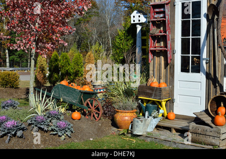 Autumn New England harvest decorated scene for Halloween with pumpkins, plants in front of shed. - Stock Photo