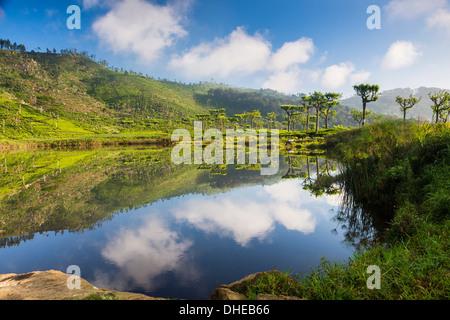 Lake at Haputale, Nuwara Eliya District, Sri Lanka Hill Country, Sri Lanka, Asia