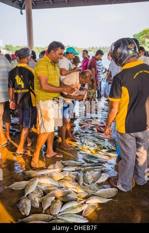 Fish for sale at Negombo fish market (Lellama fish market), Negombo, West Coast, Sri Lanka, Asia - Stock Photo