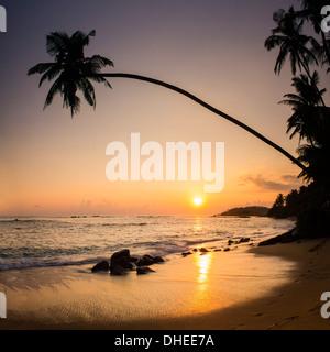 Palm tree at sunset on tropical Mirissa Beach, South Coast of Sri Lanka, Southern Province, Sri Lanka, Asia - Stock Photo