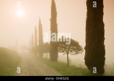 Cypress trees in the early morning fog, Val d'Orcia, UNESCO World Heritage Site, Province Siena, Tuscany, Italy, - Stock Photo