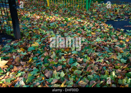 London Fields, Hackney. Fallen leaves from St Jude storm - Stock Photo