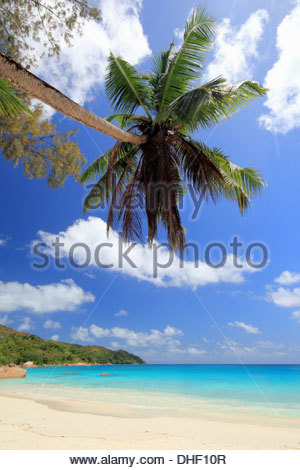 Palm tree and beach, Praslin Island, Seychelles - Stock Photo
