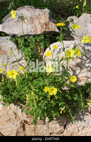 Flowering plants between stone rocks - Stock Photo