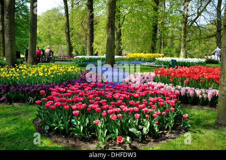 Purple, yellow, blue, pink and white tulips in Keukenhof park in Holland - Stock Photo