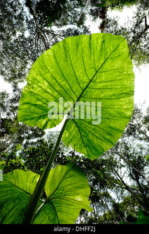 Dense thick cloud forest in national park Volcan Baru in western Chiriqui Province Republic of Panama - Stock Photo