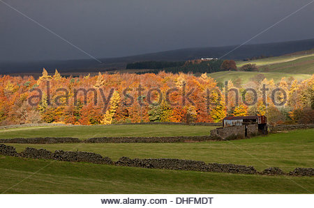 Northern Pennine Hills, Holwick, Middleton-in-Teesdale, Co Durham UK . 09th Nov, 2013. Following the rain the sun - Stock Photo