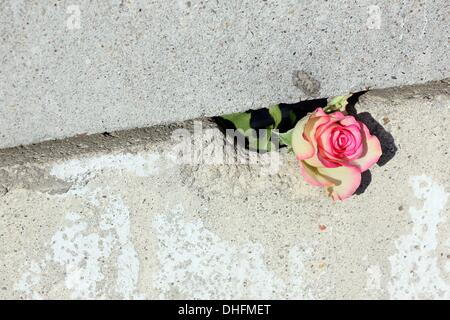 Berlin, Germany. 09th Nov, 2013. A rose stucked in a gap of the memorial of the Berlin Wall in Berlin, Germany, - Stock Photo