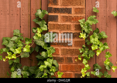 Green Ivy growing on a brick and wooden fence. - Stock Photo