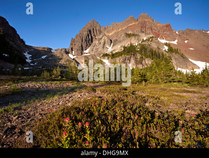 Paintbrush blooming among heather in Upper Canyon Creek Meadow at base of Three Fingered Jack in Mount Jefferson - Stock Photo