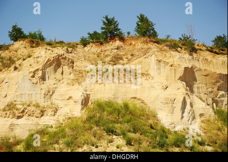Background of yellow and white sandstone with trees - Stock Photo