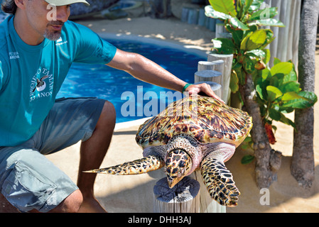 Brazil, Bahia: Manager Gonzalo Rostan shows a Hawksbill turtle (Eretmochelys imbricata) in the Tamar Project in - Stock Photo