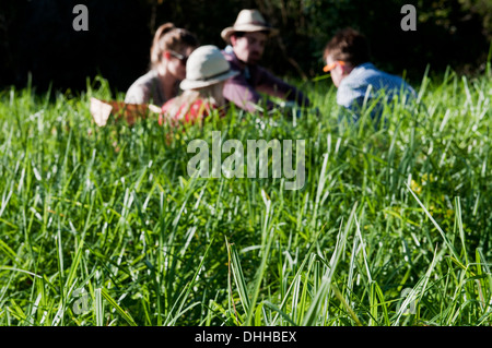 Group of friends having picnic in long grass - Stock Photo