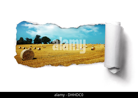 Torn paper over a summer hay bale field landscape - Stock Photo