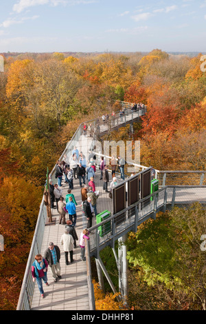 Treetop walkway through a forest in autumn, Hainich National Park, Thuringia, Germany - Stock Photo