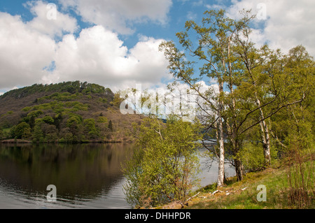 Garreg Ddu Reservoir edged with trees, including Silver Birch  in the Elan Valley Mid Wales - Stock Photo