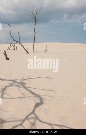 Shifting sand dunes slowly but inexorably swallowing up adjacent trees, Słowinski National Park, Pomeranian Voivodeship, - Stock Photo