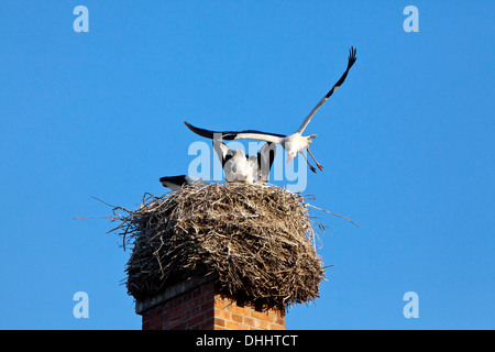 Stork family nest on a chimney, Breeding, Birds - Stock Photo