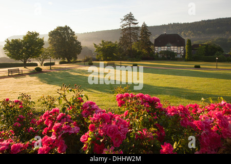 Roses at the gardens of Haemelschenburg castle, Emmerthal, Weser Hills, North Lower Saxony, Germany, Europe