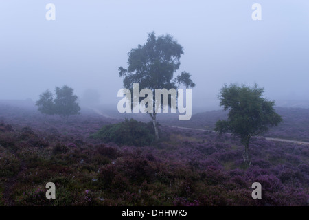 A misty morning at Westleton Heath, Suffolk, England - Stock Photo