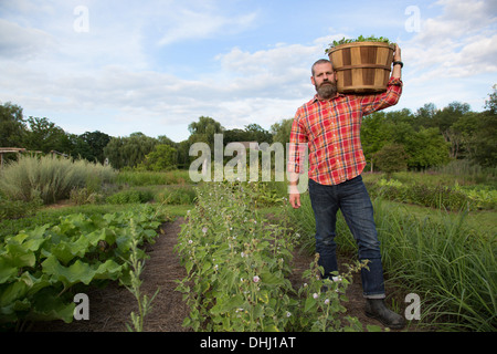 Mature man holding basket of leaves on herb farm - Stock Photo