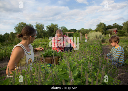 Family working together on herb farm - Stock Photo