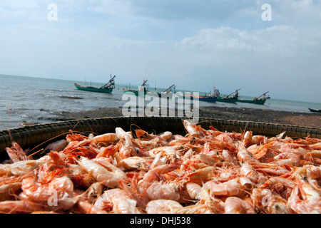 Shrimps and fishing boats in the harbour of Kep, Kep province, Gulf of Thailand, Cambodia, Asia - Stock Photo