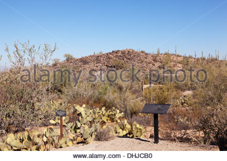 Signal Hill from Signal Hill Picnic Area Saguaro National Park Tucson Mountain District West Arizona - Stock Photo