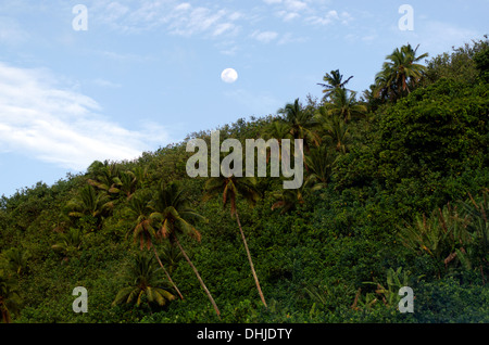 Landscape of full moon raising above coconut palm trees in the jungle of Aitutaki Lagoon Cook Islands - Stock Photo