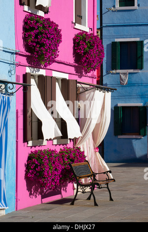 Pink flowers on pink house with white curtains, Burano, Veneto, Italy, Europe - Stock Photo