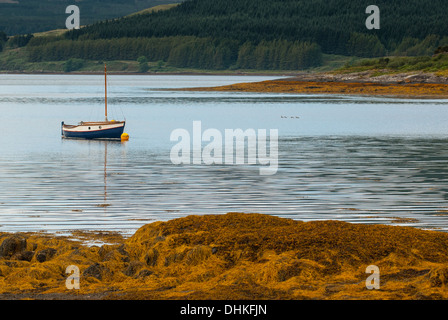 Blue yacht in bay of seaweed with forest behind. - Stock Photo