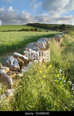 Early morning sunlight shines on a dry stone wall near West Fleet, Chesil, Dorset. - Stock Photo