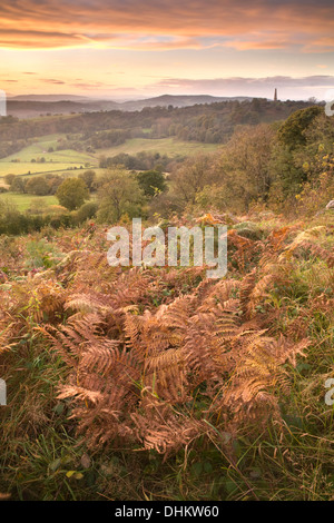 Photograph of Bracken taken from Midsummer Hill on the Malvern Hills, Herefordshire, at sunset looking towards Eastnor. - Stock Photo