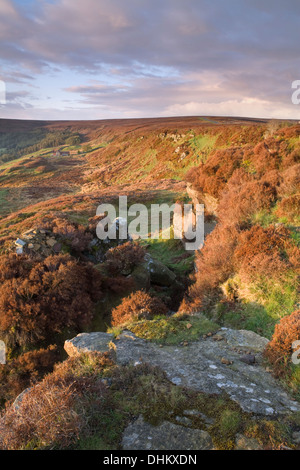 The sunrise bathes the North York moors, near Botton, with golden light making the otherwise drab dormant heather - Stock Photo