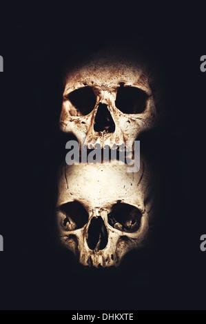 Human skulls and bones over dark background - Stock Photo