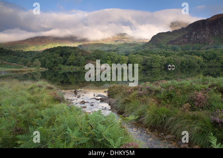 A stream flows into Llyn Dinas, Snowdonia. Yr Aran is lit up by the morning sun and is partially obscured by the - Stock Photo