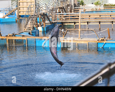 dolphin jumping in an aquarium - Stock Photo