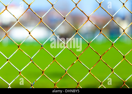 rabitz on the background of green grass - Stock Photo