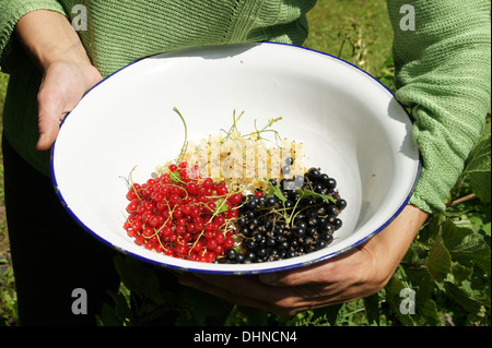 Ripe currant berries - Stock Photo