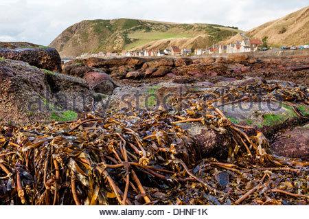 Crovie village on the Moray Firth in Scotland. - Stock Photo