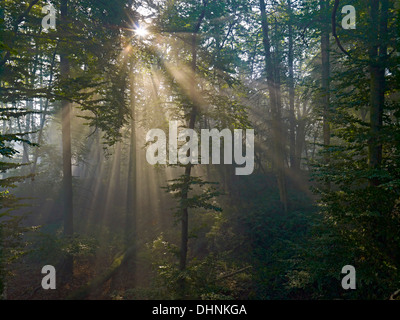 Sun rays in the forest near Bodenwerder, Lower Saxony, Germany - Stock Photo
