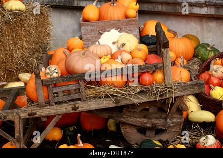 A Collection of Pumpkins and Squashes, Cucurbita pepo, Cucurbitaceae. Aka Summer Squash, Winter Squash. - Stock Photo