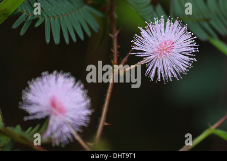 touch-me-not flower - Stock Photo