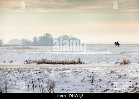 Netherlands, Broek in Waterland. Polder Volgermeerpolder. Nature reserve. Former garbage dump. Man and galloping - Stock Photo