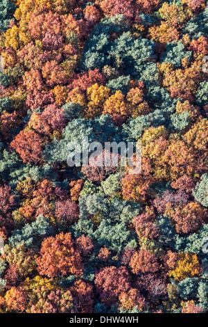 Netherlands, Loosdrecht, Trees. Autumn colors. Aerial - Stock Photo