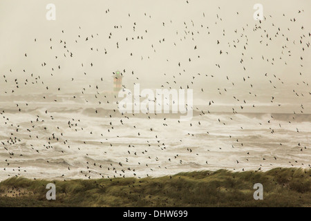 Netherlands, IJmuiden, Heavy stoL on North Sea. Beacon. Flock of sparrows trying to fly against the wind - Stock Photo