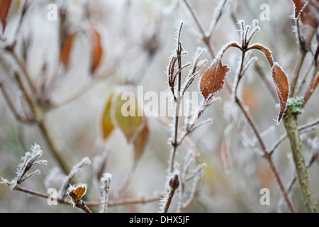 the beauty of winter  Jane Ann Butler Photography  JABP975 - Stock Photo