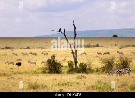 Landscape, Maasai Mara National Reserve, Kenya - Stock Photo