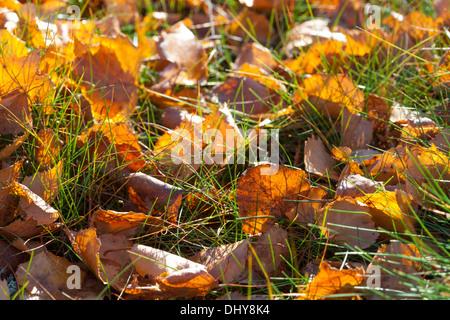 Beautiful autumn in Finland - Stock Photo