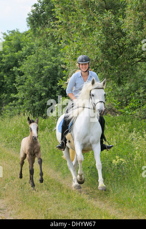 Ride out on Connemara pony mare, her foal running aside - Stock Photo